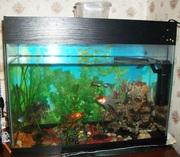 Аквариум  на 50 литров с рыбками